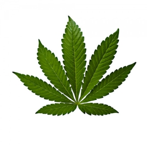 Cannabis indica blad